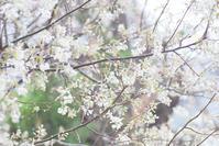 4/10 ジューンベリー - 「あなたに似た花。」