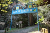 定光寺東海自然歩道でショウジョウバカマが綺麗でした。 - Sabopic LIFE