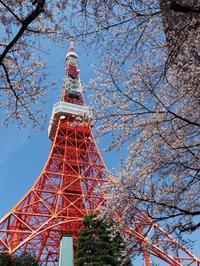 東京タワー&千鳥ヶ淵の桜 - 光の音色を聞きながら Ⅱ