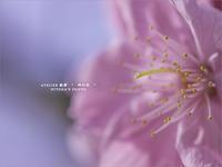 """桜の季節 - ATELIER 絵夢 """" 時の色 """""""