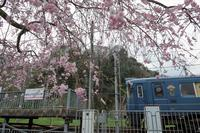 駅の桜2017 宮福線 - 今日も丹後鉄道