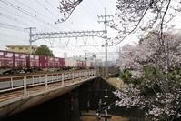 藤田八束の鉄道写真@夙川公園の桜が満開、若者たちの元気な姿、貨物列車の写真を掲載 - 藤田八束の日記