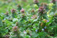 小さな花園 - 小さな森の写真館 (a small forest story)