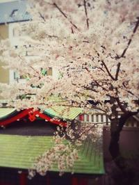 芽生えの春 - 和合一致