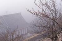 真っ白な月ヶ瀬 その② - katsuのヘタッピ風景