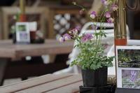 お気に入りカフェのお花 - Select
