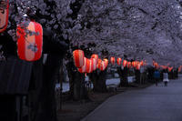 夜桜そぞろ歩き  - 風の彩り-2