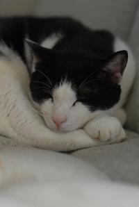 日曜の午后・後編 - Black Cat Moan