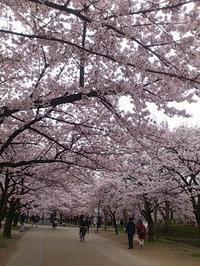 ご褒美(庄田) - 柚の森の仲間たち