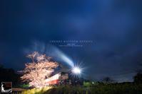 cherry blossom express - 箱庭の休日