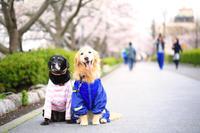 # 春を迎えた散歩道へ 君たちと一緒に♪ - Green+Pink