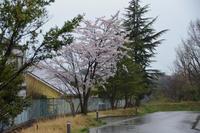 11日のお散歩 - むーちゃんパパのブログ 3