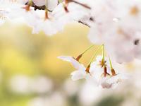 春の雨の日 ゲンジボタル 上陸幼虫観察・・不発 - オヤヂのご近所仲間日記