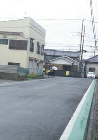 雨にも負けず     登校2日目 - MINKWIN Cattery &Pretty Aki