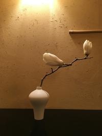 白木蓮 - g's style day by day ー京都嵐山から、暮らしを楽しむ日々をお届けしますー