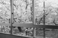 教室の窓から - パトローネの中