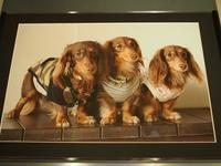 17年4月11日 素敵な贈り物♪&ワンプロ! - 旅行犬 さくら 桃子 あんず 日記