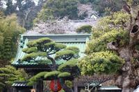 【長谷寺】江ノ電沿線散策♪Part 4 - うろ子とカメラ。