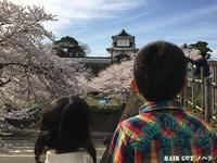 お花見 ~兼六園~ - 金沢市 床屋/理容室/散髪  「ヘアーカット ノハラ ブログ」 メンズヘッドスパは当店で!
