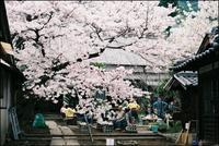 scene1458:神社で花見大会 - 自由時間ー至福のひとときー