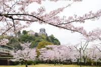 【桜】情報 No.3  桜・ちょっと散り始めました! - 名鉄犬山ホテル情報