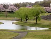遊水池のある公園 - Zen おりおりの記