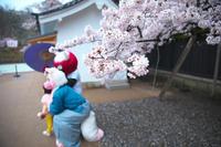 彦根城と桜と雨と。2017 - 笑顔が一番