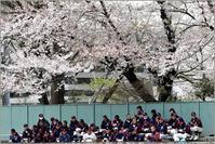 2017春 国府台球場の桜 市川昴対浦安 - すべては夏のためにⅡ