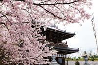 桜とインカメ - BLOG  ホージャな人々(編集部編)
