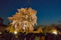 祇園界隈、思い出の桜 - 思い出 Photo Photo