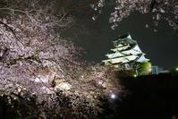 ちょっくら夜桜撮りへ@2017-04-11 - (新)トラちゃん&ちー・明日葉 観察日記