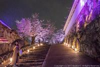 姫路城 三の丸桜のライトアップ(3) - シセンのカナタ