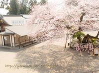 2017年の桜・その2 - さて。月でも見るか。