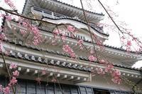 枝垂れ桜とお城♪ - happy-cafe*vol.2