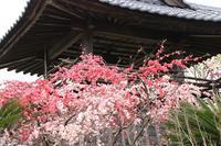 鐘楼と花桃♪ - happy-cafe*vol.2