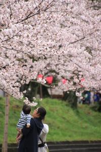 桜を楽しむ♪ - happy-cafe*vol.2