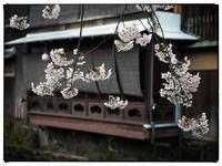 祇園-12 - Hare's Photolog