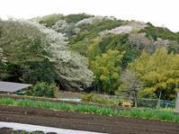 公田と六国見山の畑行ったり来たりで忙しい(4・2、7、10) - 北鎌倉湧水ネットワーク