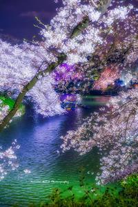 千鳥ヶ淵、夢桜 - 風景とマラソンと読書について語るときに僕の撮ること