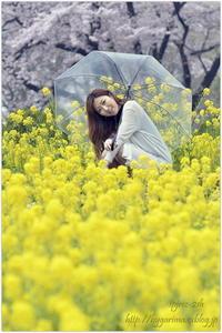 桜雨が降る - caetla