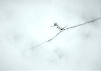 《 奇跡の枝 》 - 『ヤマセミの谿から・・・ある谷の記憶と追想』