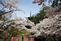 久々に清水寺へ - じじ & ばば の Photo blog