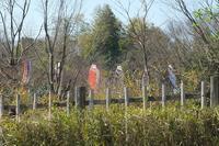 ■ 鯉幟のある風景   17.4.11 - 舞岡公園の自然2