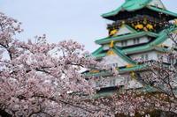XF90mmで撮る大阪城 - とりあえず撮ってみました