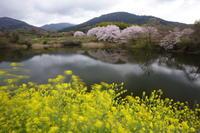 春風 - ratoの大和路