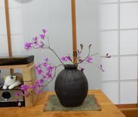 本で「植本祭」に参加してください♫ - ご機嫌元氣 猫の森公式ブログ