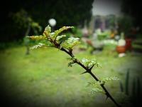 木の芽時 - あそびをせんとや ~あそびっこ~