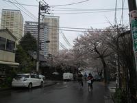 花散らしの雨 - 節操のない写真館