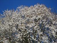 春のリース・ヒル 2 -  Der Liebling ~蚤の市フリークの雑貨手帖2冊目~