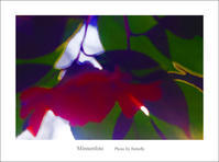 File:カルメン - Minnenfoto